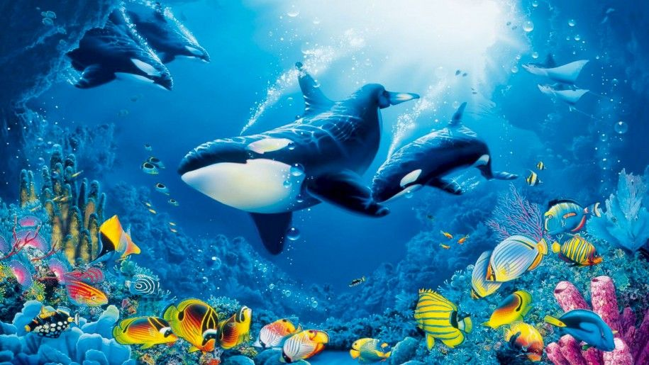 Underwater world coral reef colorful fish marine fauna with ocean underwater world coral reef colorful fish marine fauna with ocean orcas killer whales publicscrutiny Images
