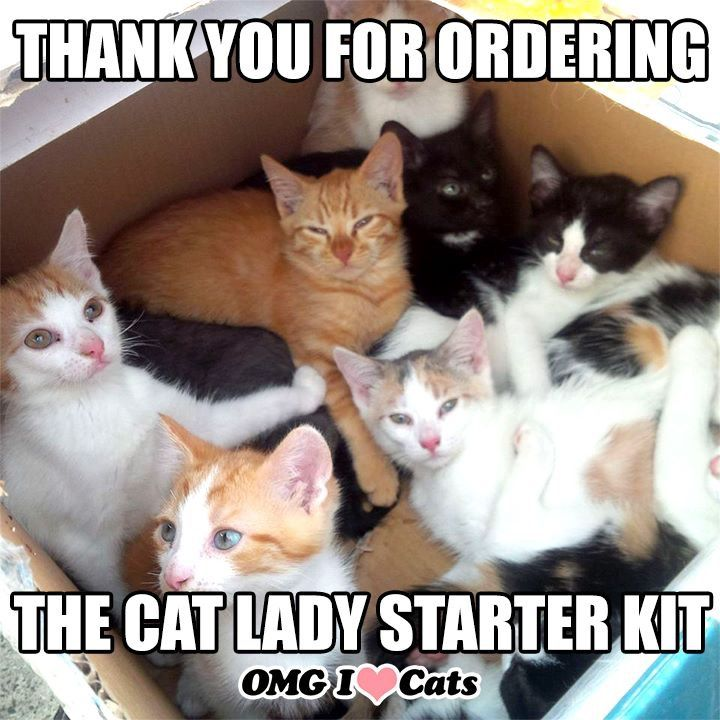 Pin By Mimi Frenchman On Cats And Dogs Kittens Kitten Season