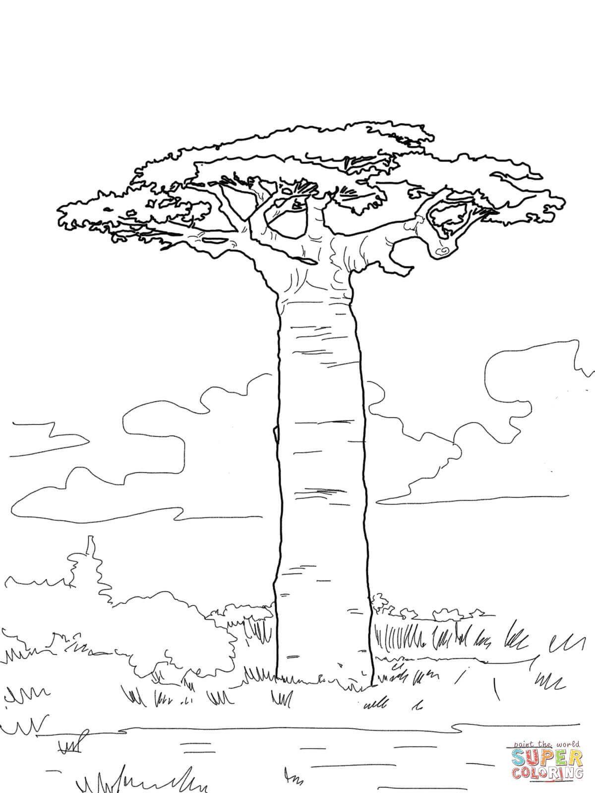 Affenbrotbaum Ausmalbilder Affenbrotbaum Ausmalbilder Shablony Arvore Para Colorir Arte Da Africa Arvore Desenho