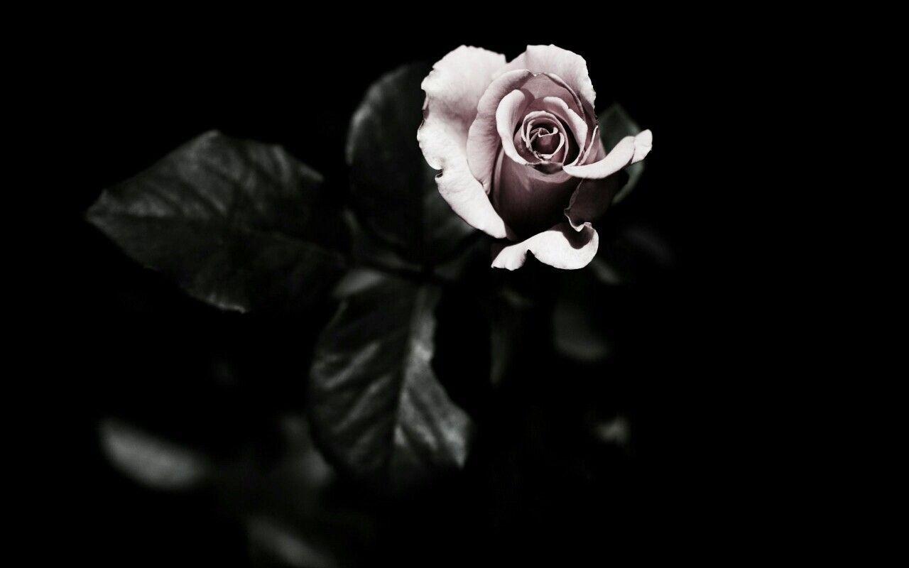 Image Result For Black Magic Aesthetic Dark Flowers Magic Aesthetic Flower Backgrounds