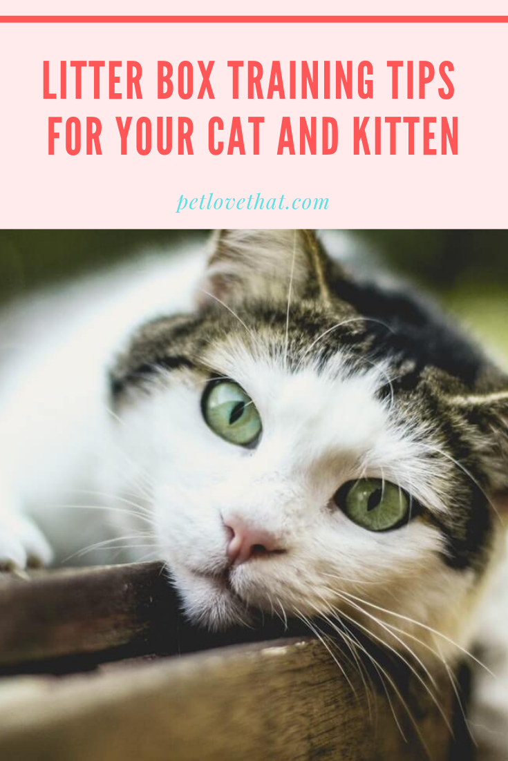 We Have Prepared A Guide For You To Help You Learn How To Train Your Cat To Use Its Litter Box Adopting A C Cat Training Cat Adoption Cat Training Litter Box