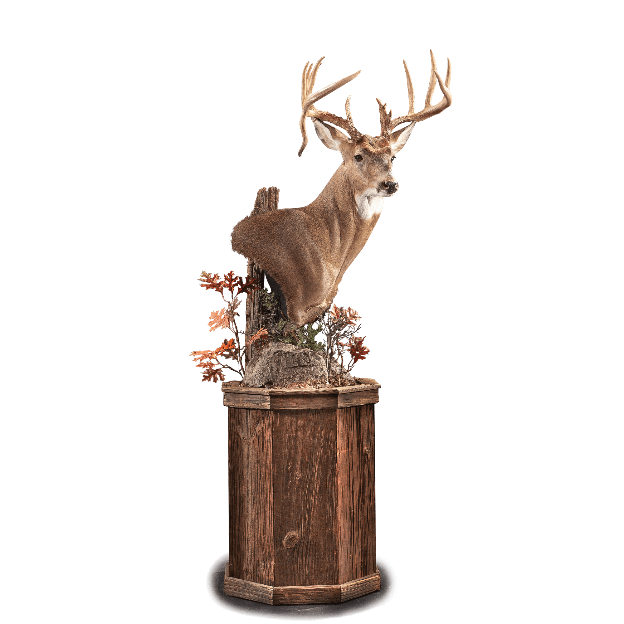 This upright Whitetail pedestal is accentuated with