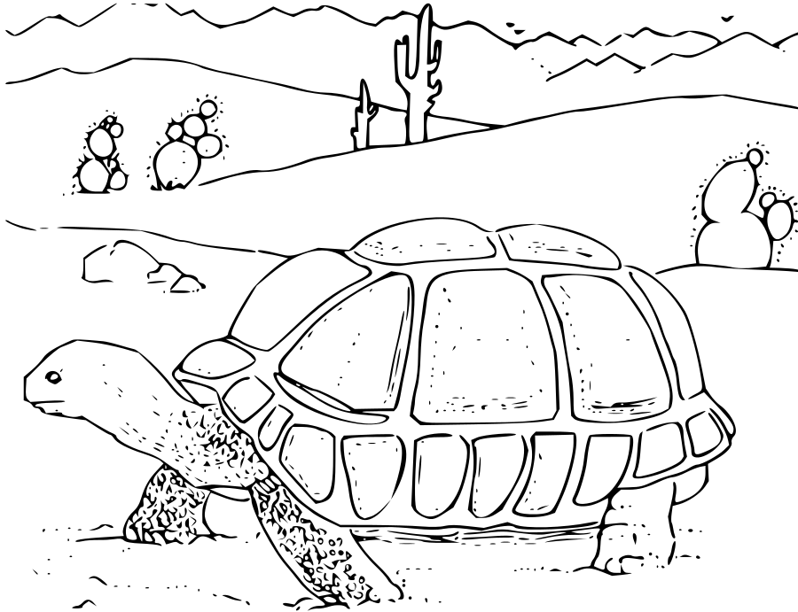 Free printable Desert Tortoise coloring page or color it online at