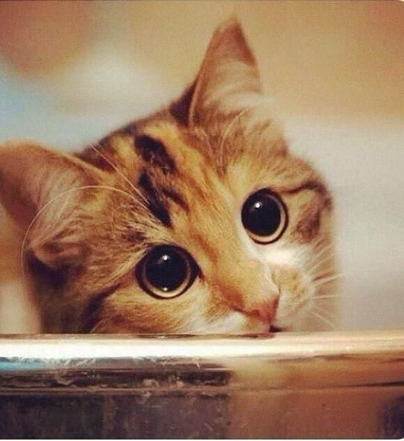 How can you say no to those eyes pic.twitter.com/EczOrzhb3y