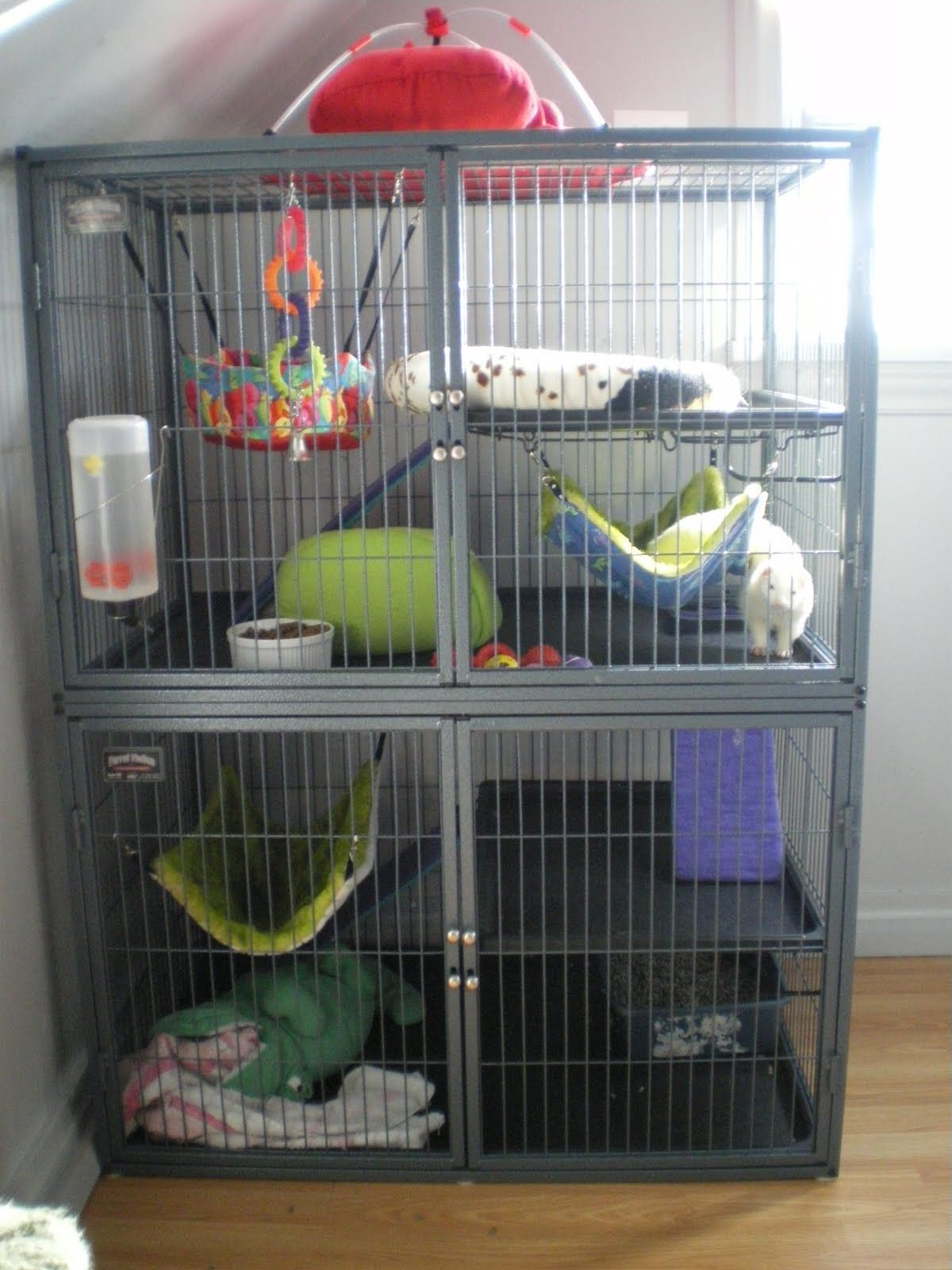 Really want a cage like this they'd have so much more