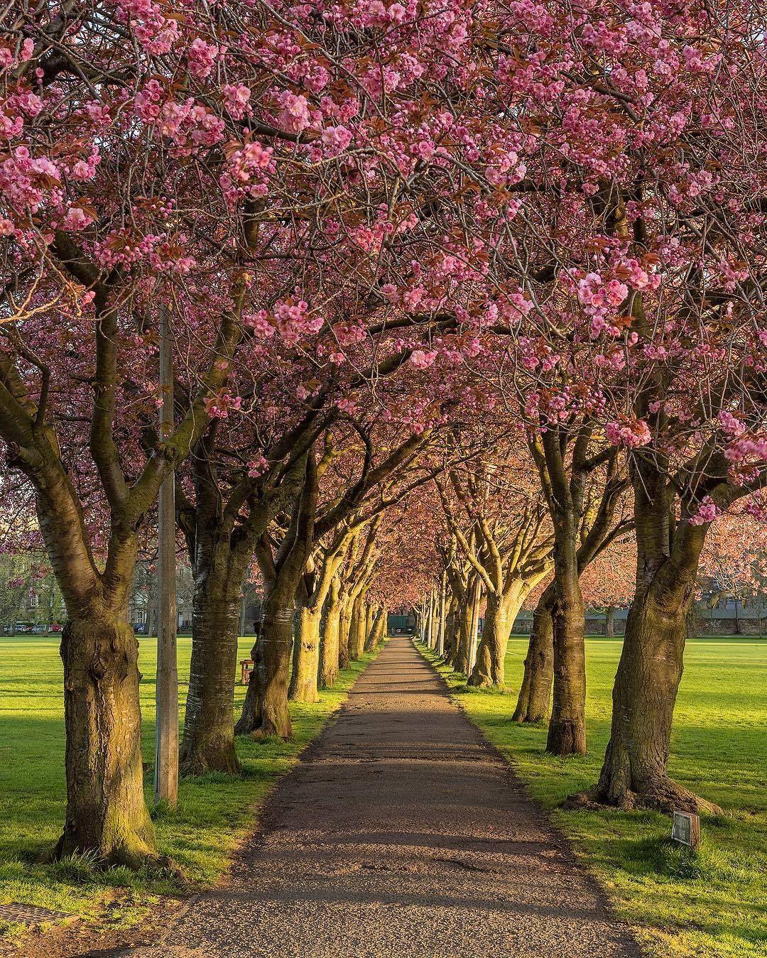 Scotland Places In Scotland Edinburgh City Centre Beautiful Landscapes