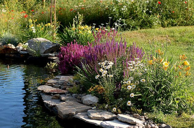 Landscaping around a pond pictures google search koi for Landscaping around koi pond