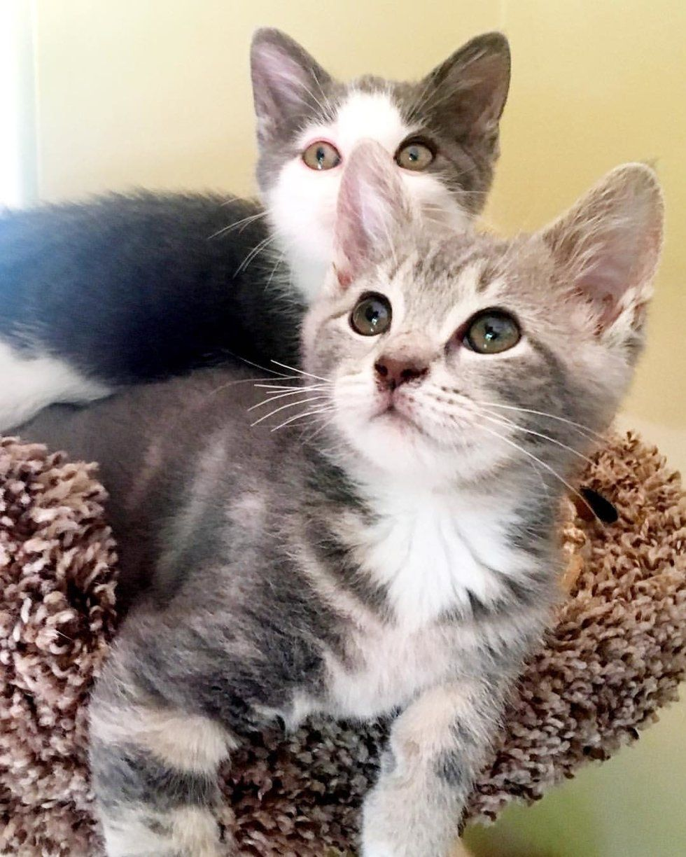 Kitten Who Lost His Siblings Finds New Brother To Cuddle They Won T Leave Each Other S Side With Images Kittens Cuddling Cat Breeds