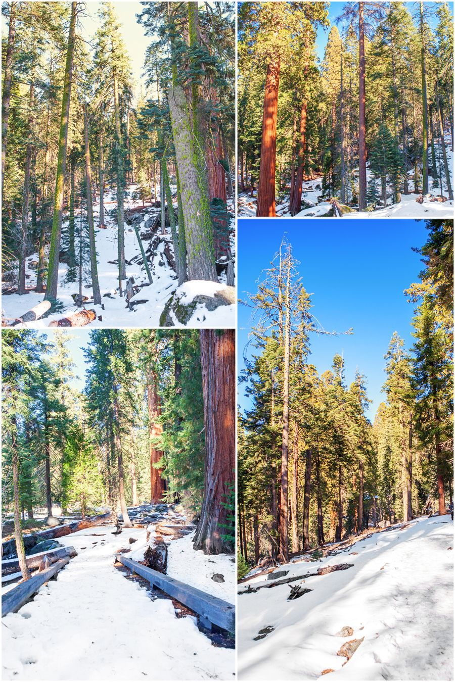winter in sequoia kings canyon national parks part 1 travel rh pinterest co uk