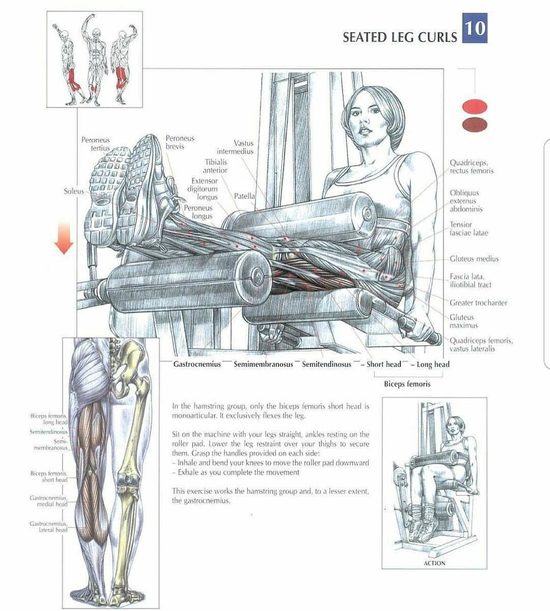 The seated LegCurl is on of the best exercises to target the