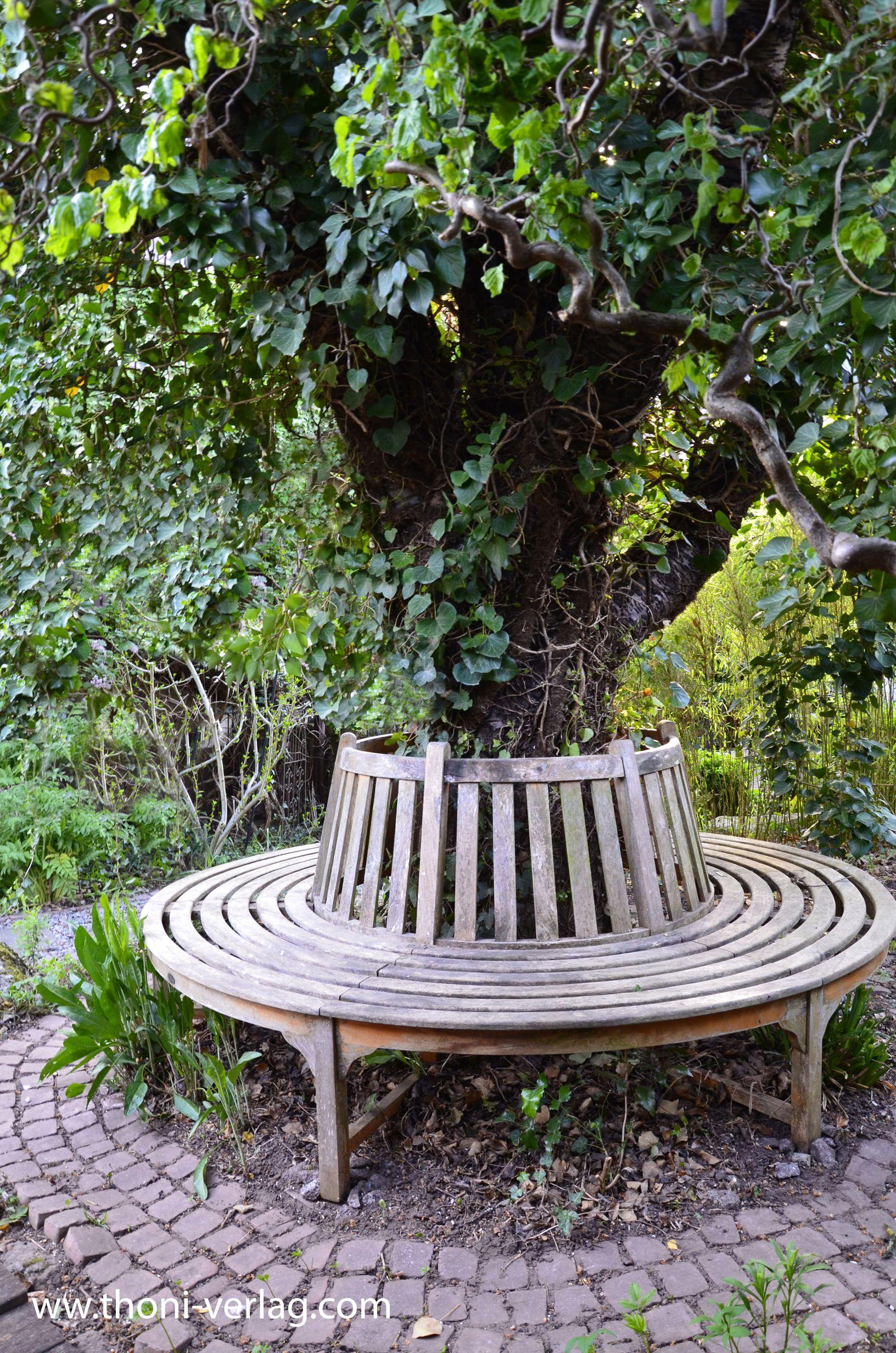 der alte kirschbaum und die baumbank wer den garten. Black Bedroom Furniture Sets. Home Design Ideas