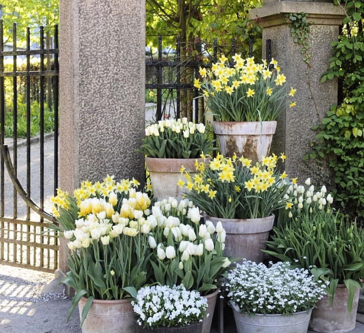 Заказ, интернет магазин редких уличных цветов и растений