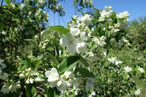 Garten für Anfänger – passende Pflanzen #pflegeleichtepflanzen