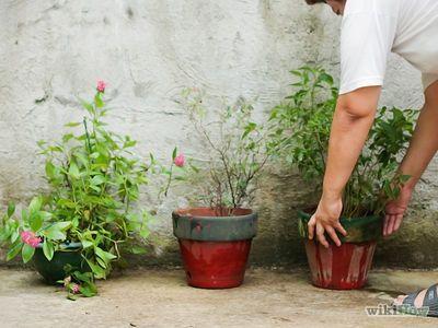 Pin En Jardinerìa