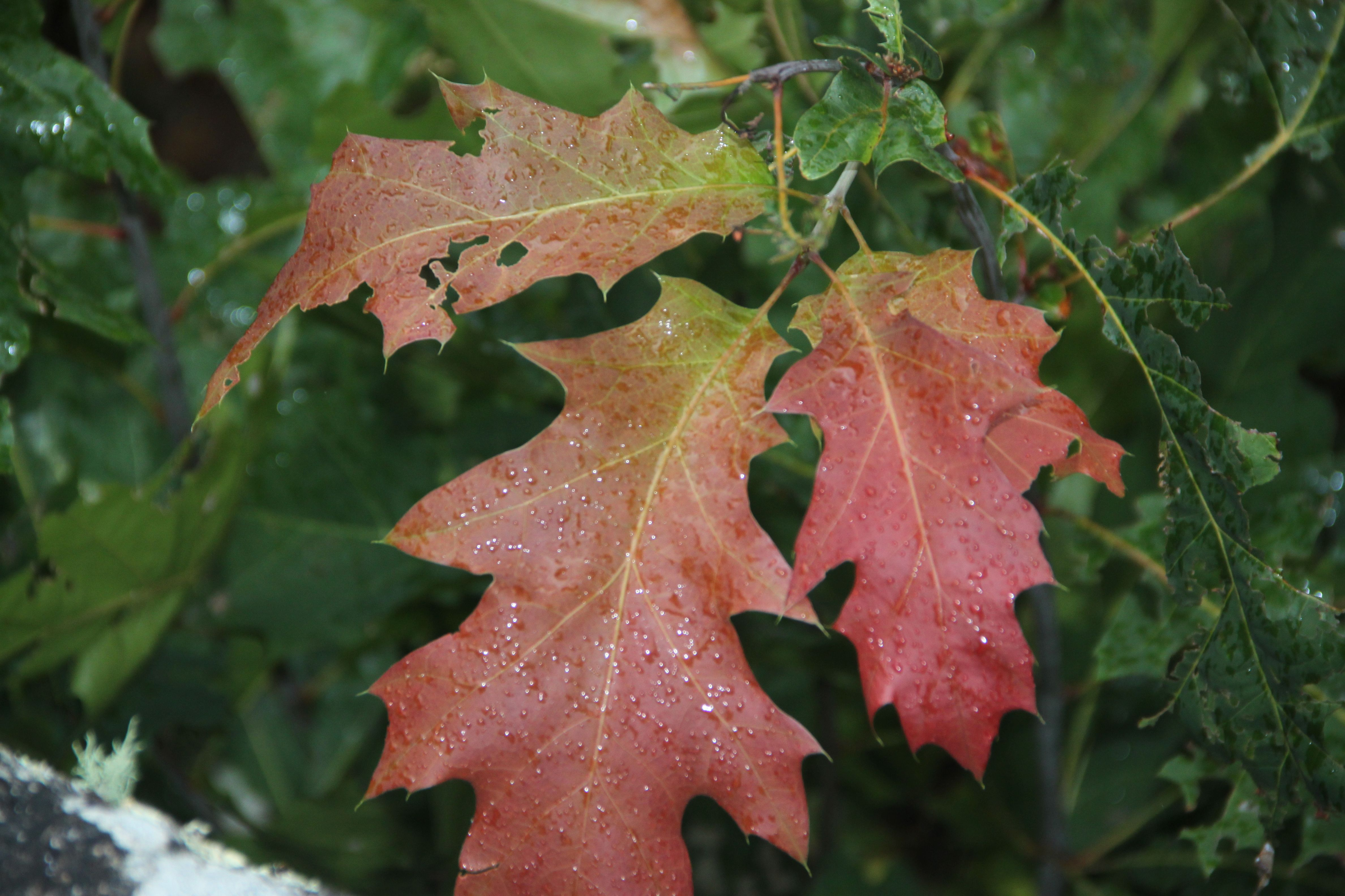 Autumn At Mount Eagle Arkansas