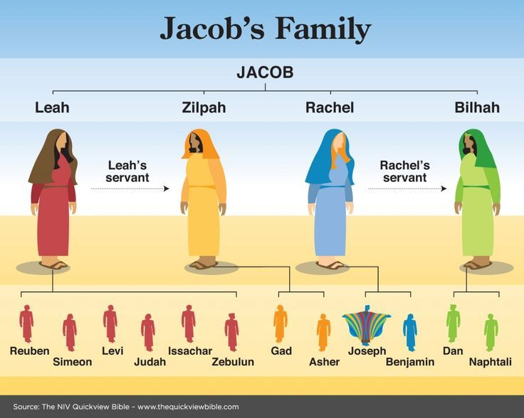 Jacob's Family Tree | Bible facts, Scripture study, Bible study help