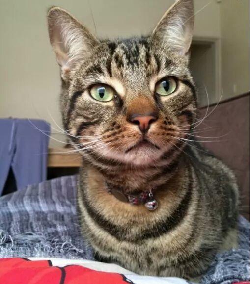 Theo the Cat