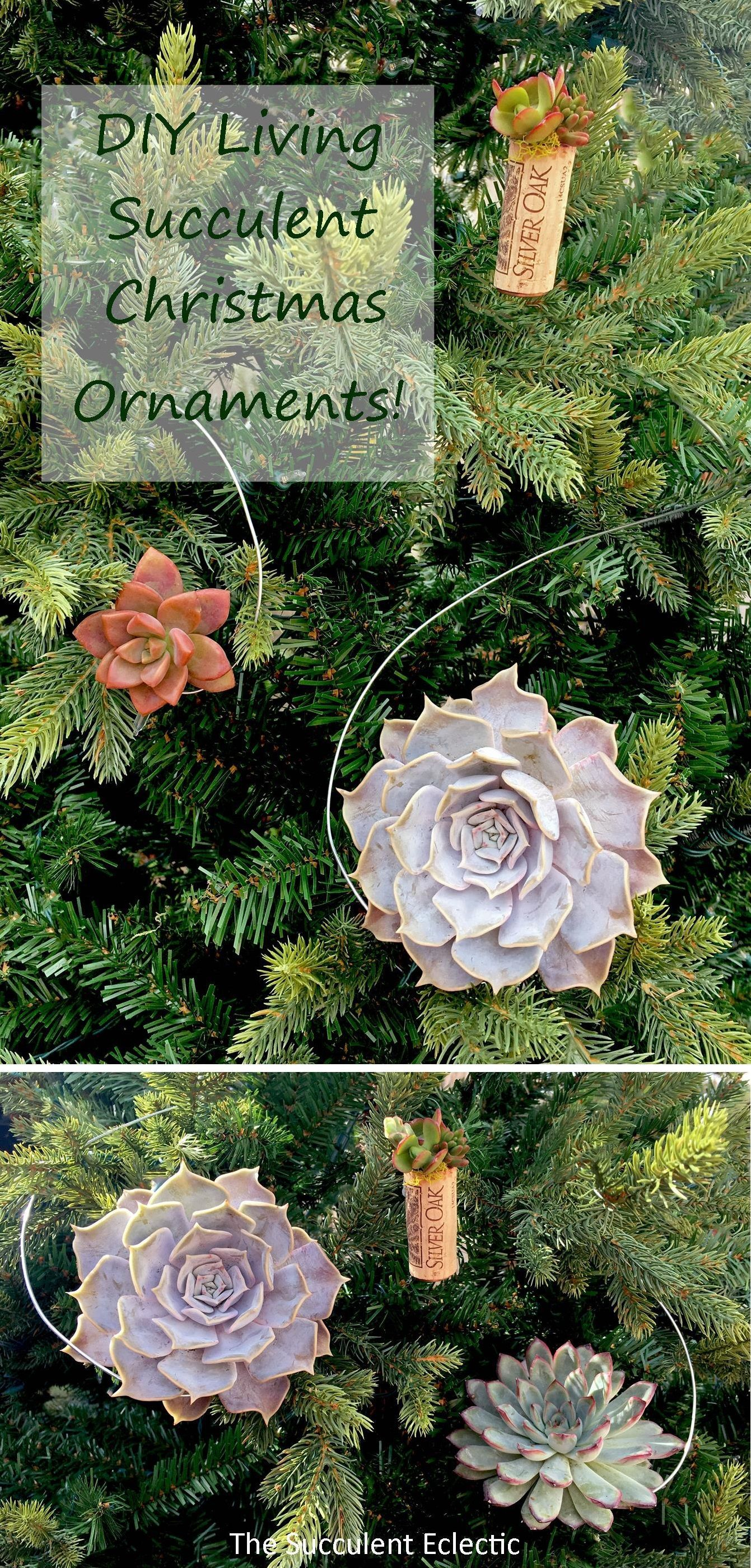 DIY Hanging Succulent Christmas Ornaments How to make