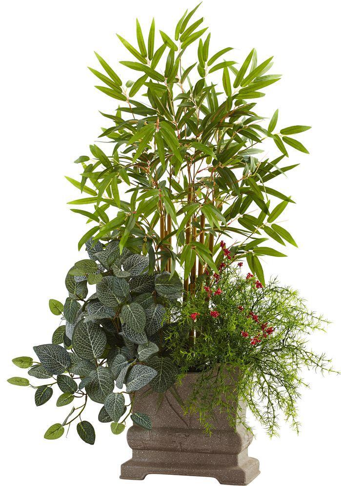 Faux Bamboo, Fittonia, & Springeri