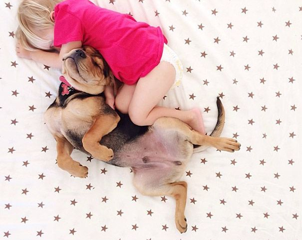 Toddler Naps With Puppy These Are The Cutest Photos You Will See - Toddler naps with puppy
