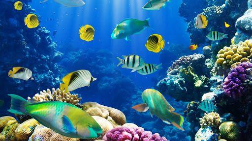 Wallpaper Magic Touch Fish Download Wallpaper Magic Touch Fish Live Wallpaper For Pc Fish Wallpaper Aquarium Live Wallpaper