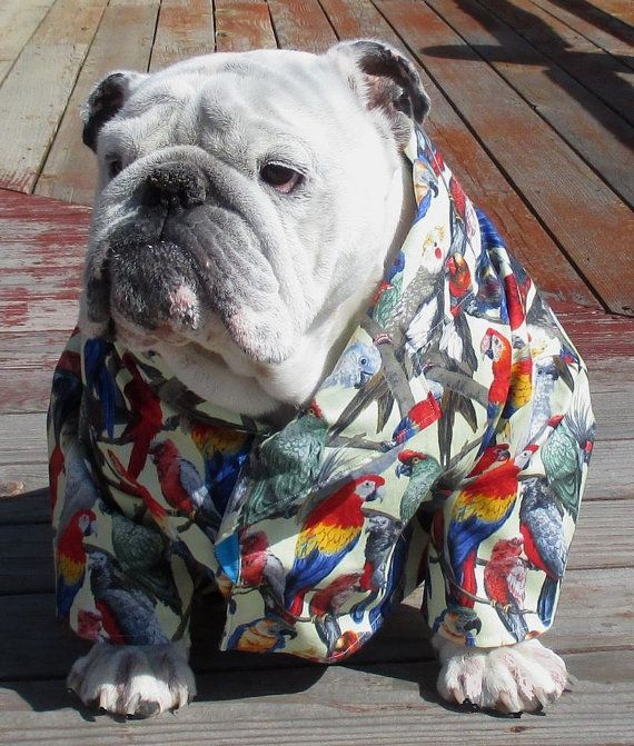 Order English Bulldog Hawaiian Shirt Hawaiin Dog Shirt Pet