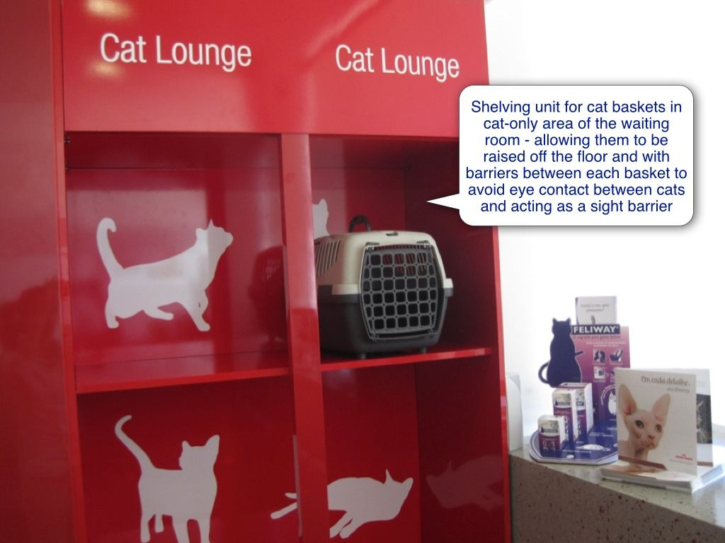 Cat Friendly Clinic Waiting Room Or Reception Area