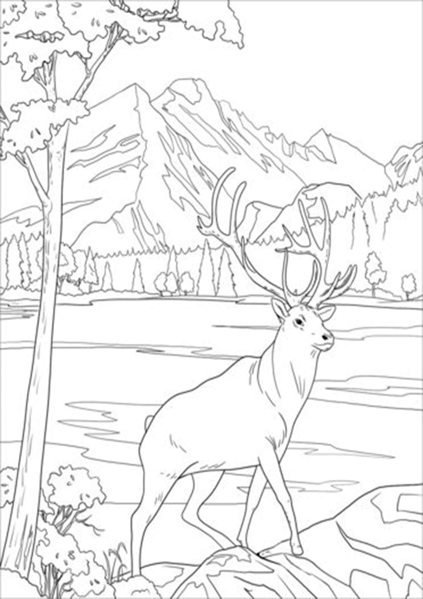 Deer Printable Coloring Pages Deer Coloring Pages Animal Coloring Pages Animal Coloring Books