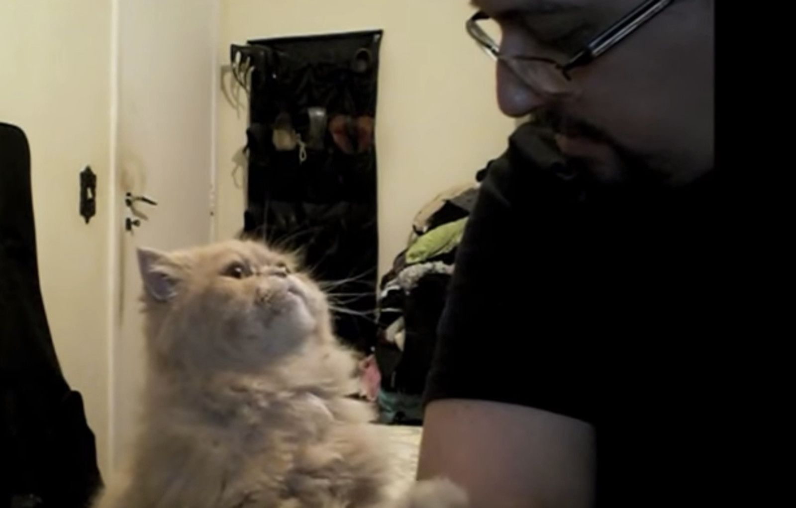Polite Fluffy Cat Begs For Neck Rubs In The Sweetest Way Video Cats Funny Cute Cats Fluffy Cat
