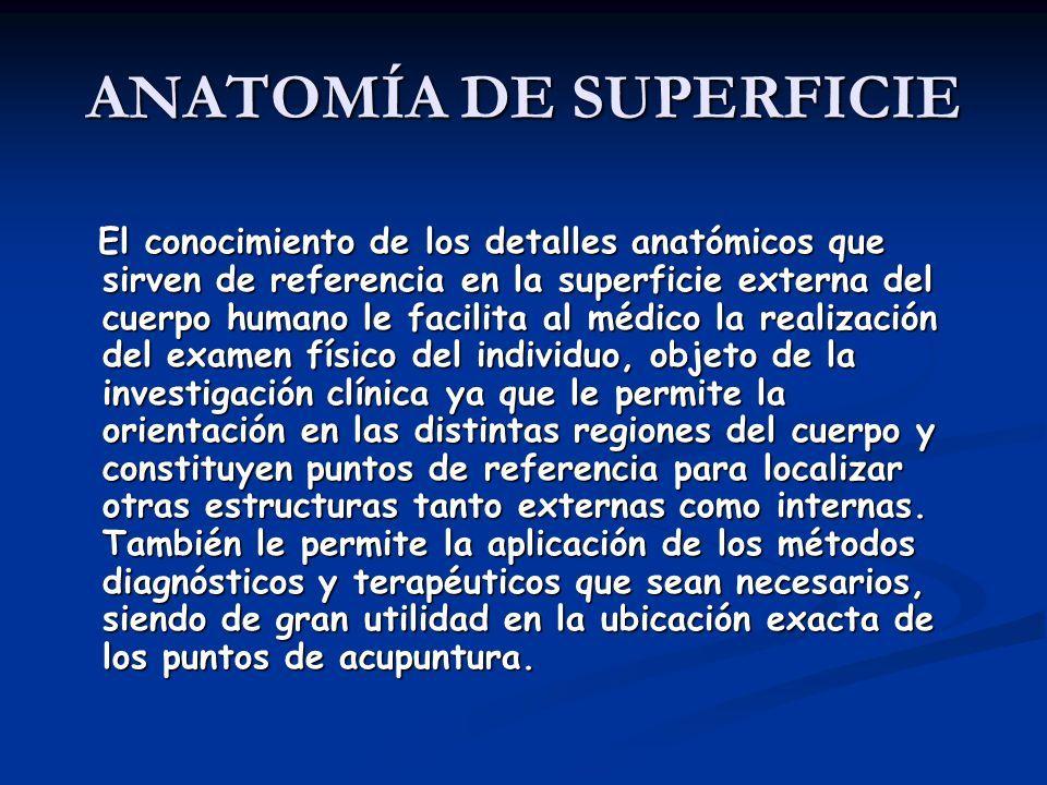 Lujoso Palmar Anatomía Definición Elaboración - Anatomía de Las ...