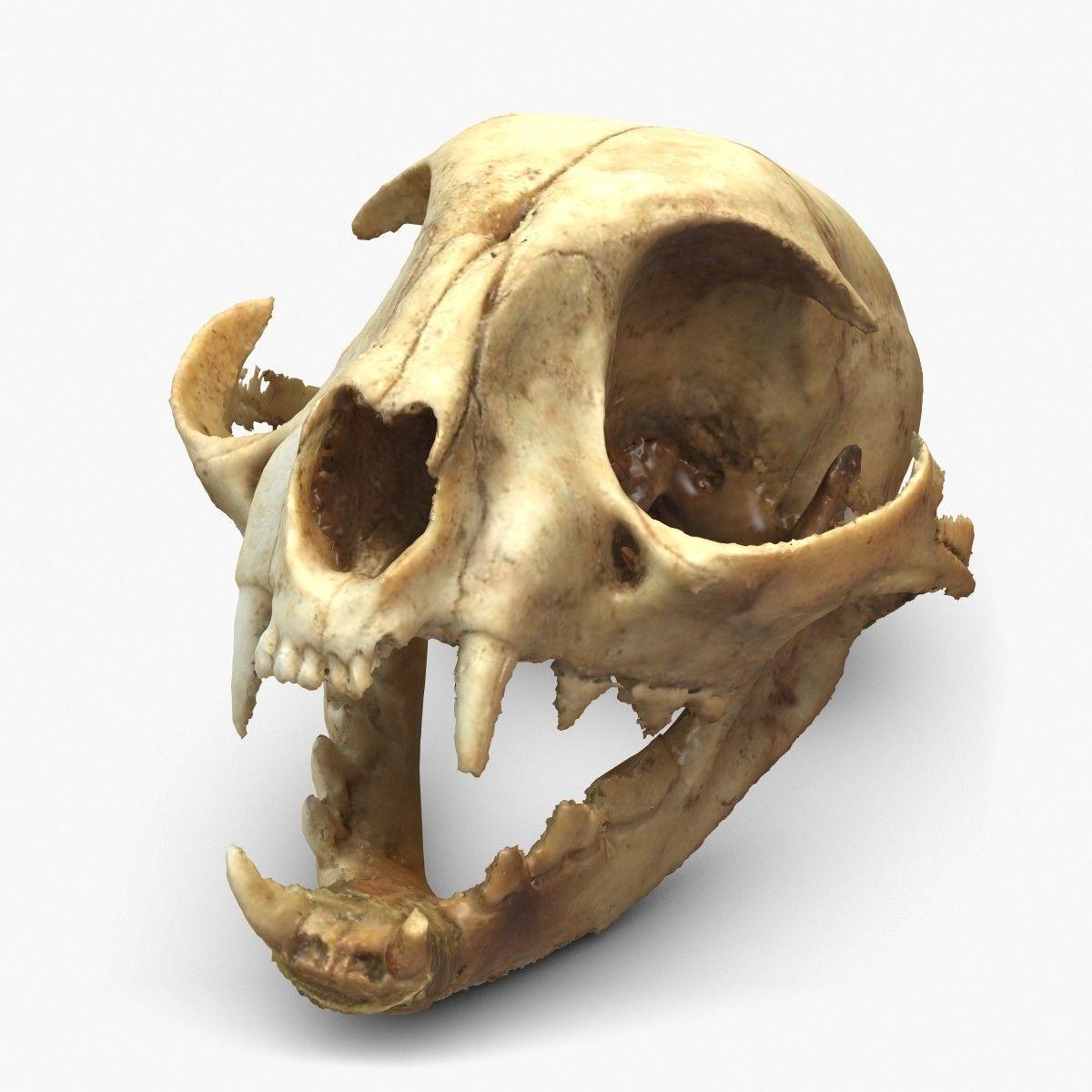3d c skull scan model | Органика | Pinterest | Cat skull, 3d and ...