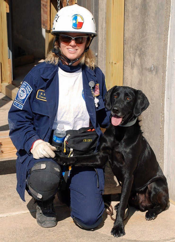 Katie Ice Teex Search Dogs Texas Task Force 1 Urban Search