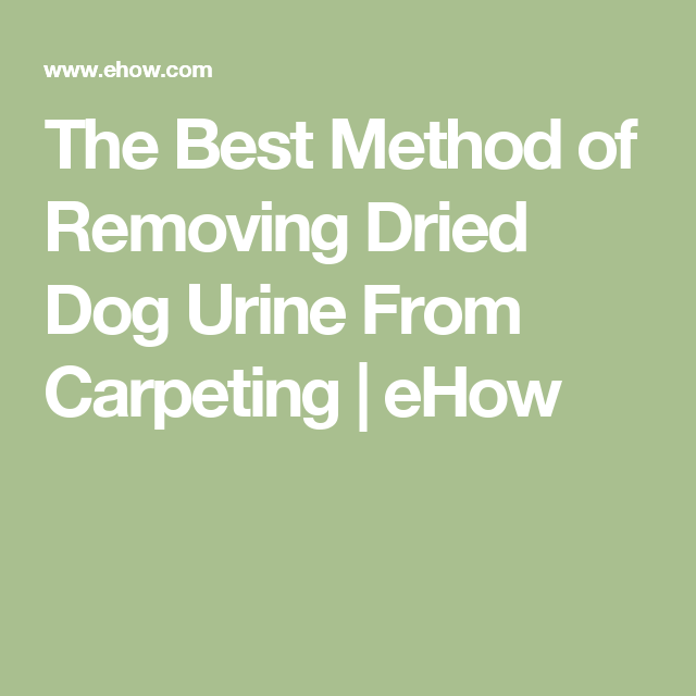 The Best Method of Removing Dried Dog Urine From Carpeting ...