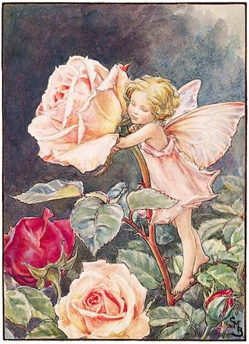 the rose fairy - Google Search