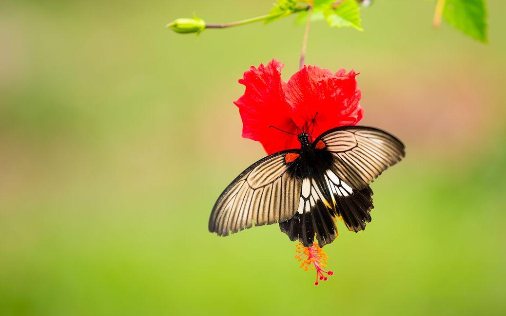 Schmetterling auf Sumatra © Nisa Maier