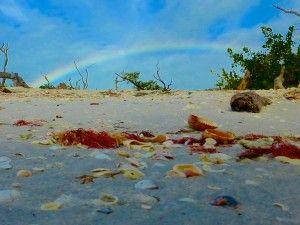 I Love Shelling | Collect Shells | Sanibel Seashells
