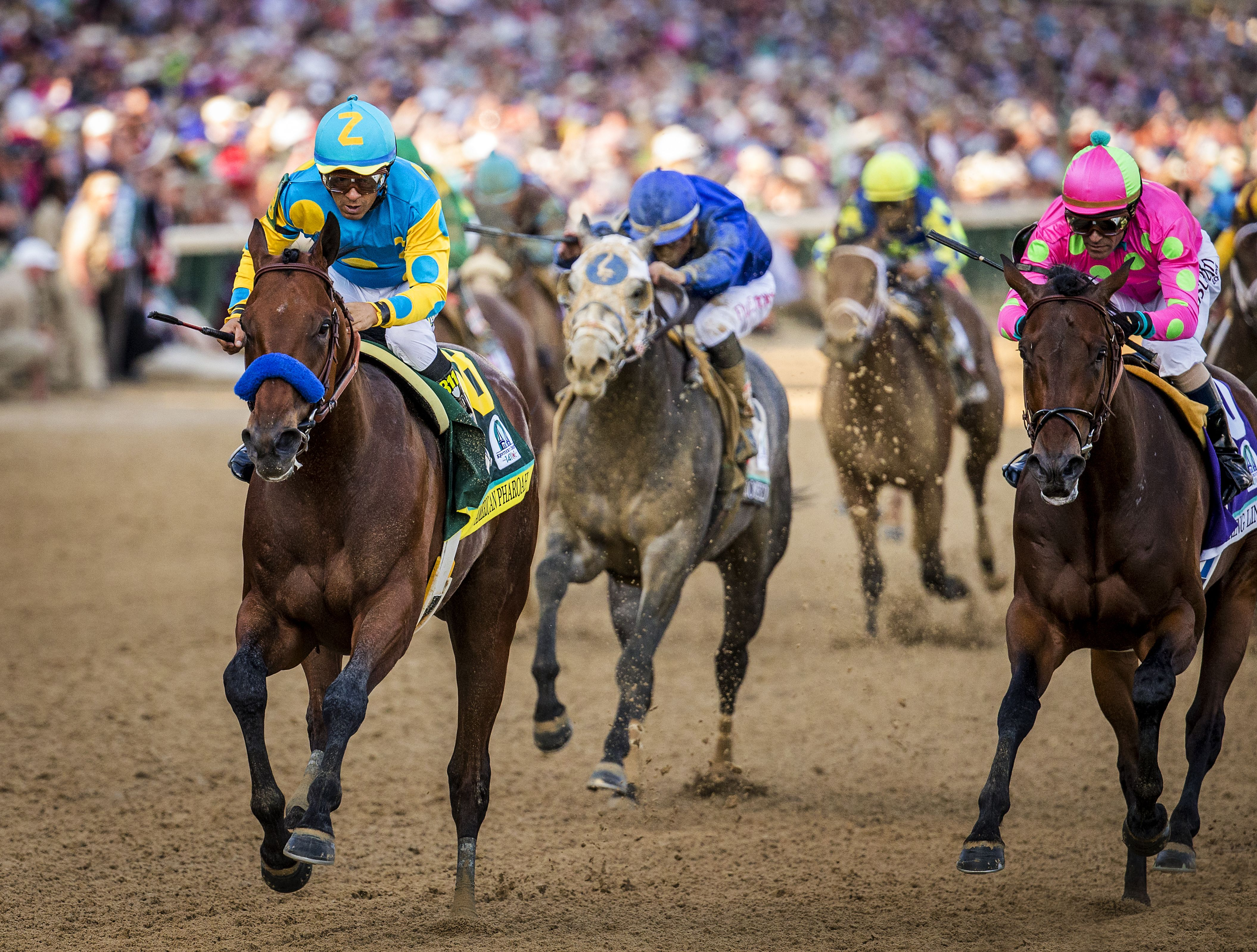 American pharoh betting odds rx sports betting forum