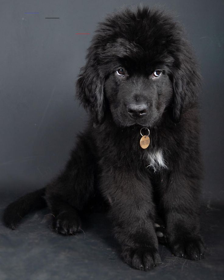 11 Big Fluffy Dog Breeds Perfect To Cuddle With Dogbeast