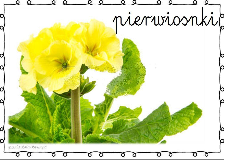 Wiosenne Kwiaty Plansze Zestaw 1 Przedszkolankowo Spring Activities Spring Crafts Math For Kids