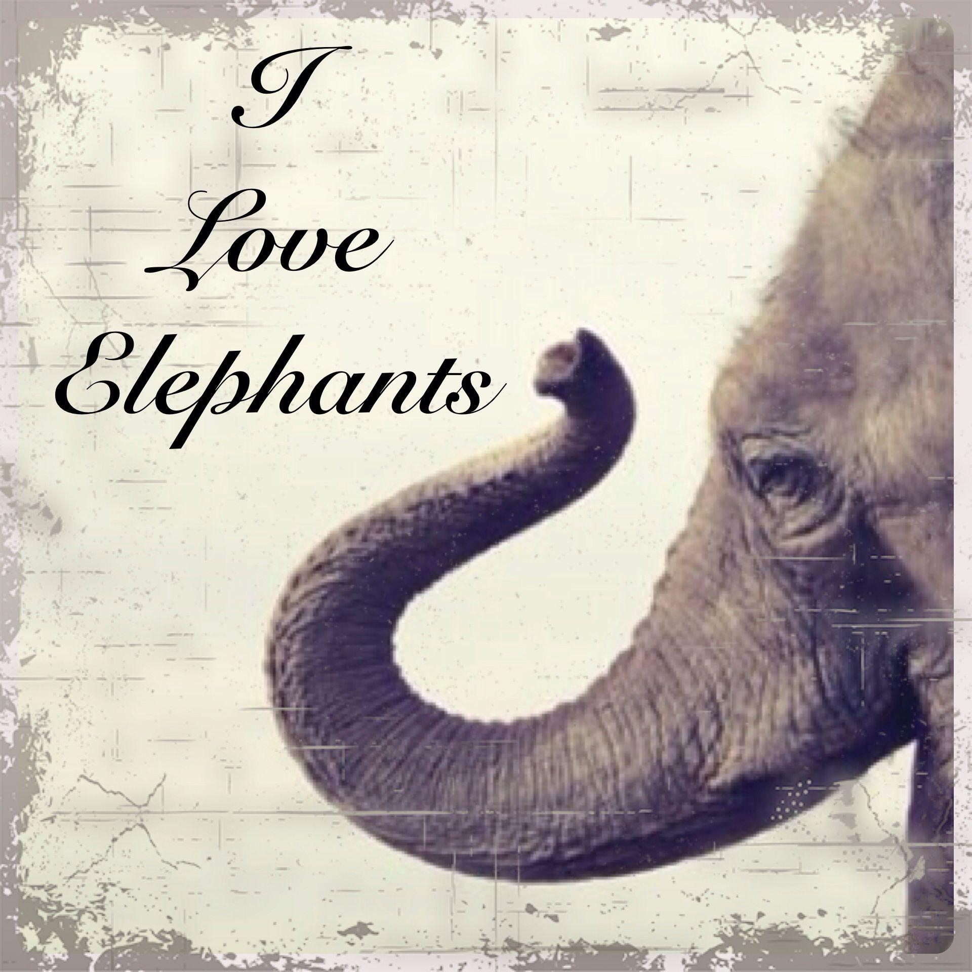Awww I Just Love Elephants