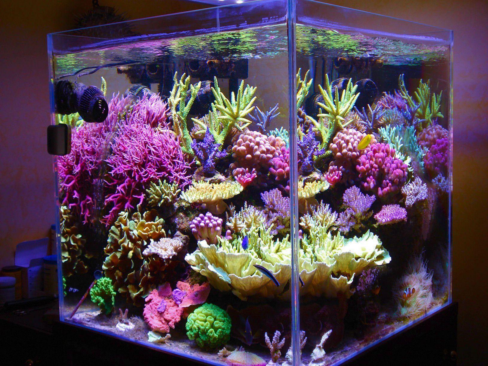 8498d9f46a1300c855f15166cd3e373e Incroyable De Aquarium Deco Des Idées