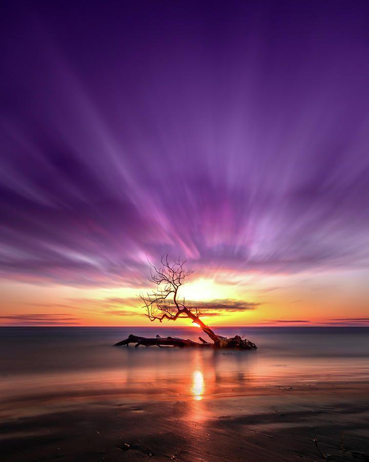 Southwick Tree by Bradley P Smith