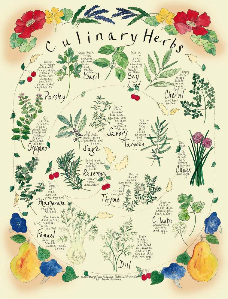 Growing Herbs Herbs Growing herbs and Herbs garden