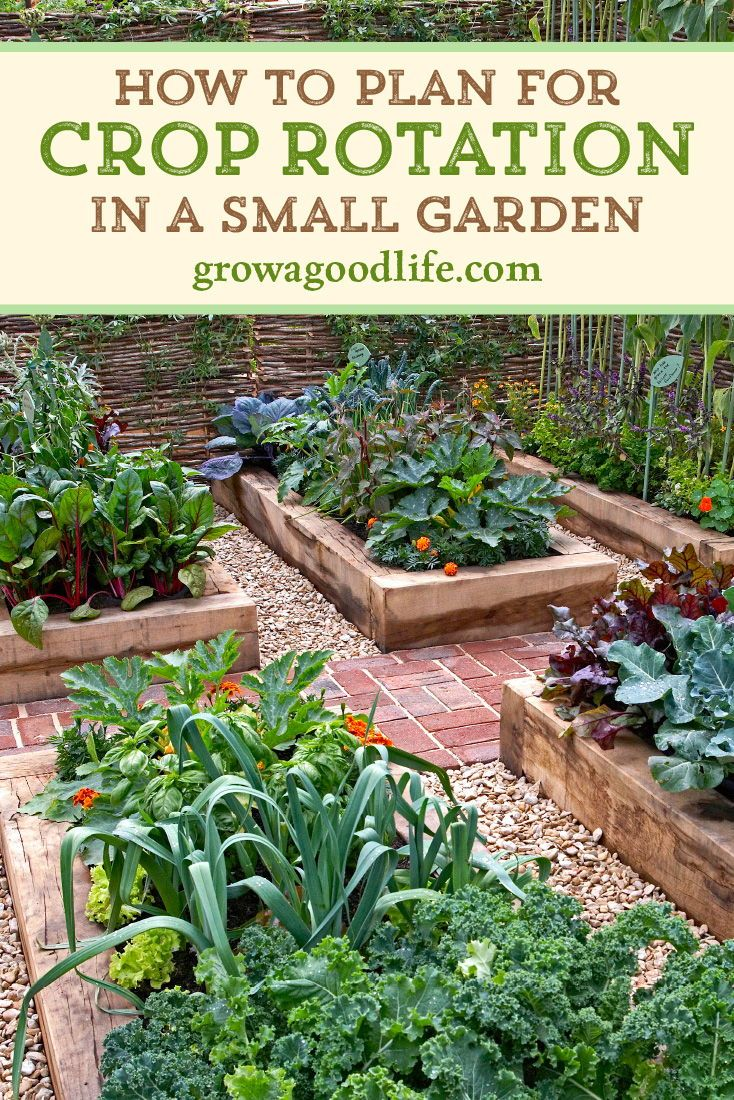 Benefits Of Crop Rotation For Your Vegetable Garden Vegetable Garden Design Backyard Vegetable Gardens Small Garden Backyard garden crop rotation