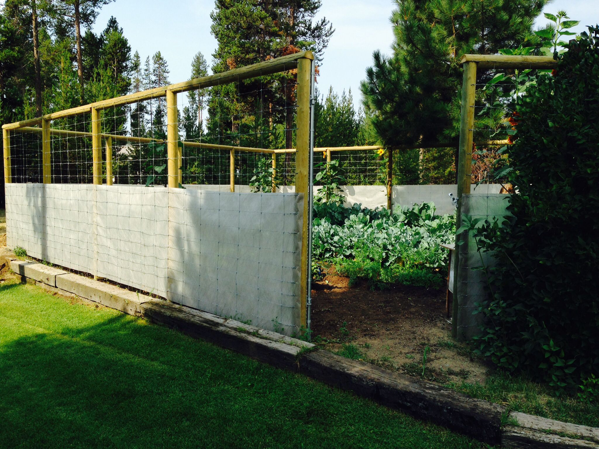 My ideal fence w landscape fabric around bottom creating a microclimate to protect from frost and wind. Terry Mawry garden