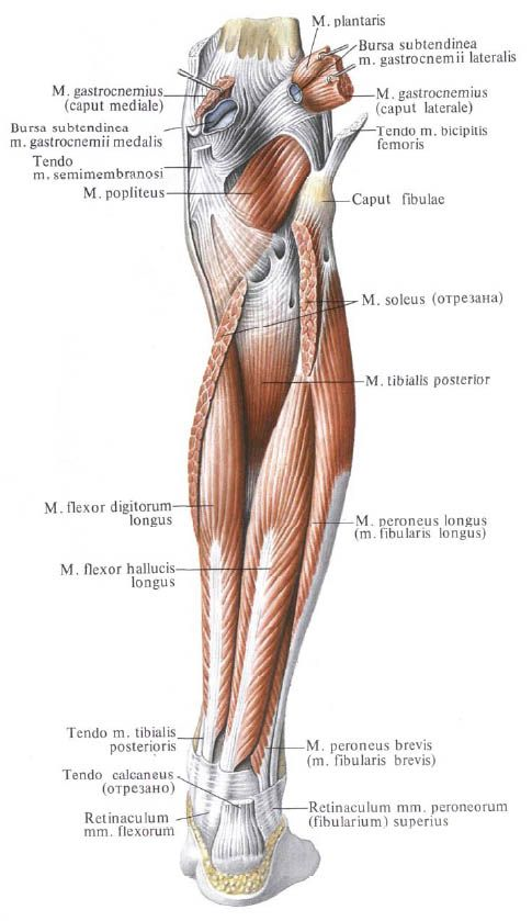Pin By On Pinterest Anatomy