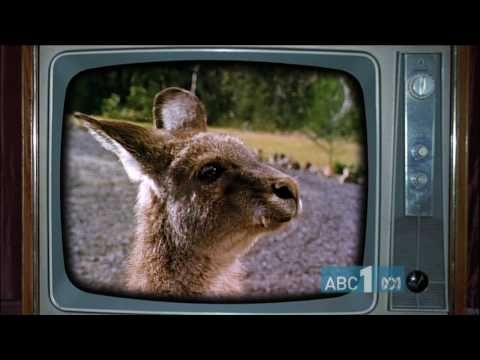 """Skippy, Skippy / Skippy a bush kangaroo.. KangaroosAustralia"