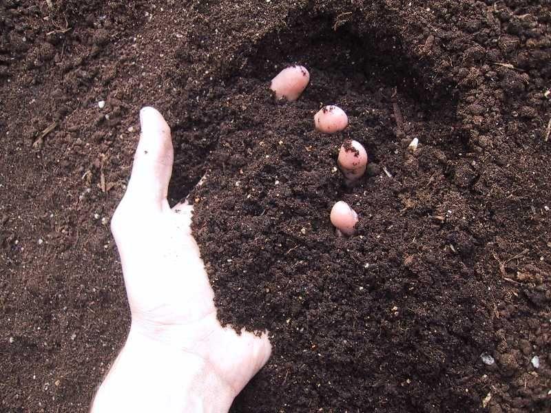How To Make Good Topsoil | Garden Guides