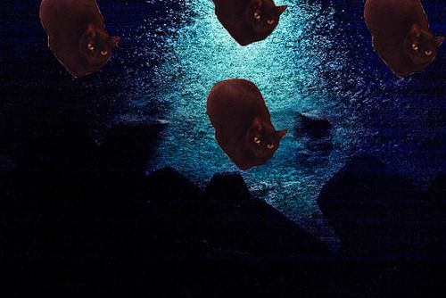 Nocturnal KittyBoats are always watching you when you sleep. Kitty boats--an idea whose time has come! via http://kittyboats.tumblr.com/