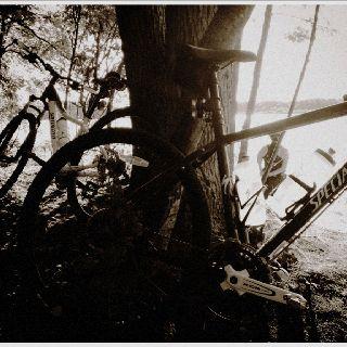 Bikes in the mist